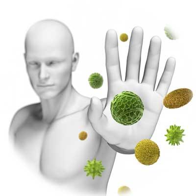 Jiaogulan and Immune System