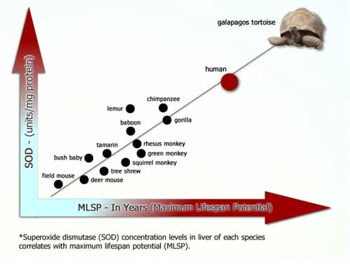 Superoxide Dismutase and Longevity