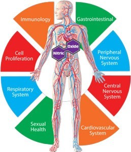 nitric oxide and body system benefits
